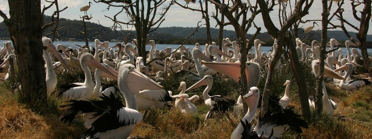 Pelican_CRW_1200