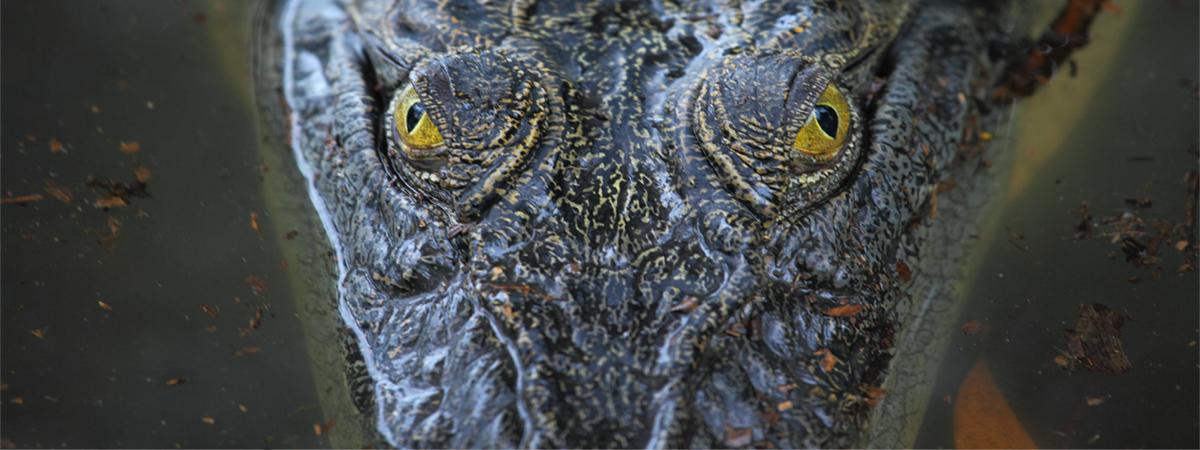 Boss Croc list image