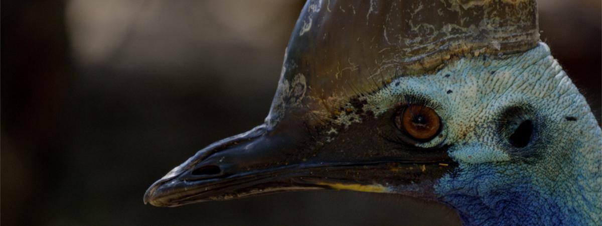 Dino Bird list image