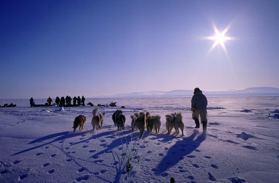 Hunter with Dog Sled on Snowy Tundra