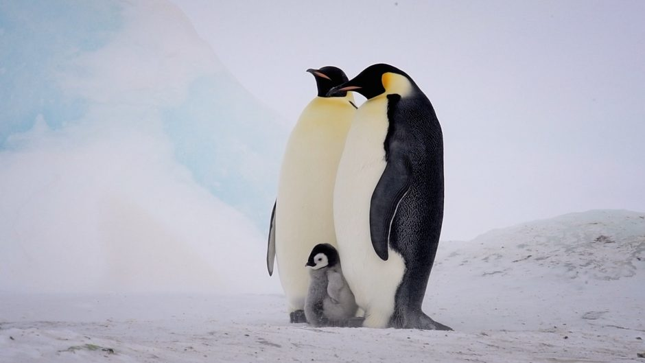 09.ep02_TwoEmperorPenguinsWithChick